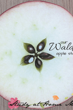 How the Apple Got It's Star: A Traditional Waldorf Story