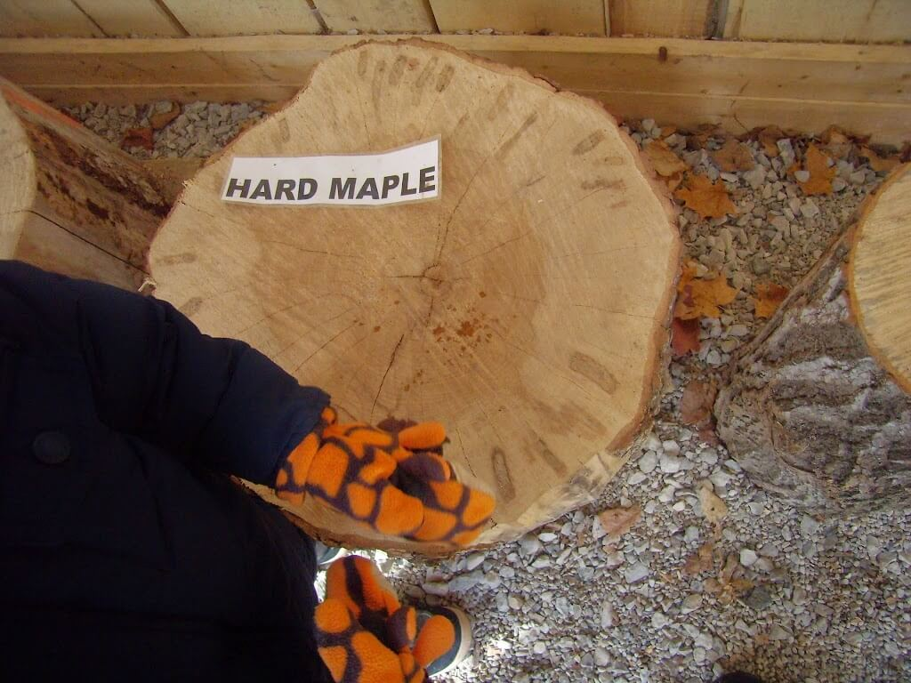 Maple Syrup Season at Study-at-Home Mama