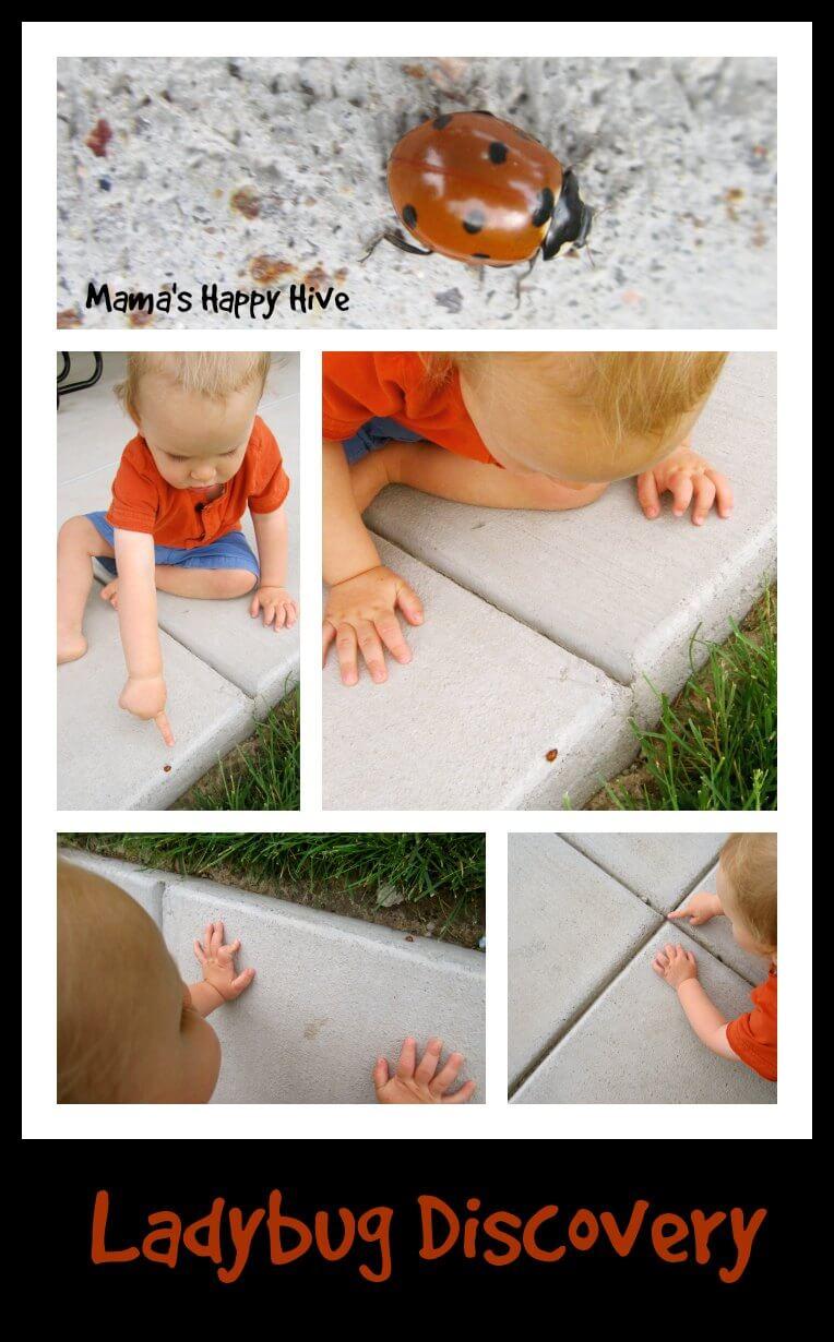 Ladybug Discovery - www.mamashappyhive.com.jpg