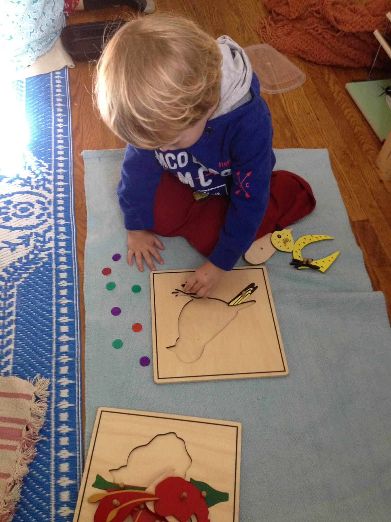 bird puzzle #montessori bird unit study
