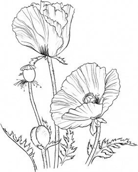 Poppy Crafts For Remembrance Day - Poppies to remember coloring page