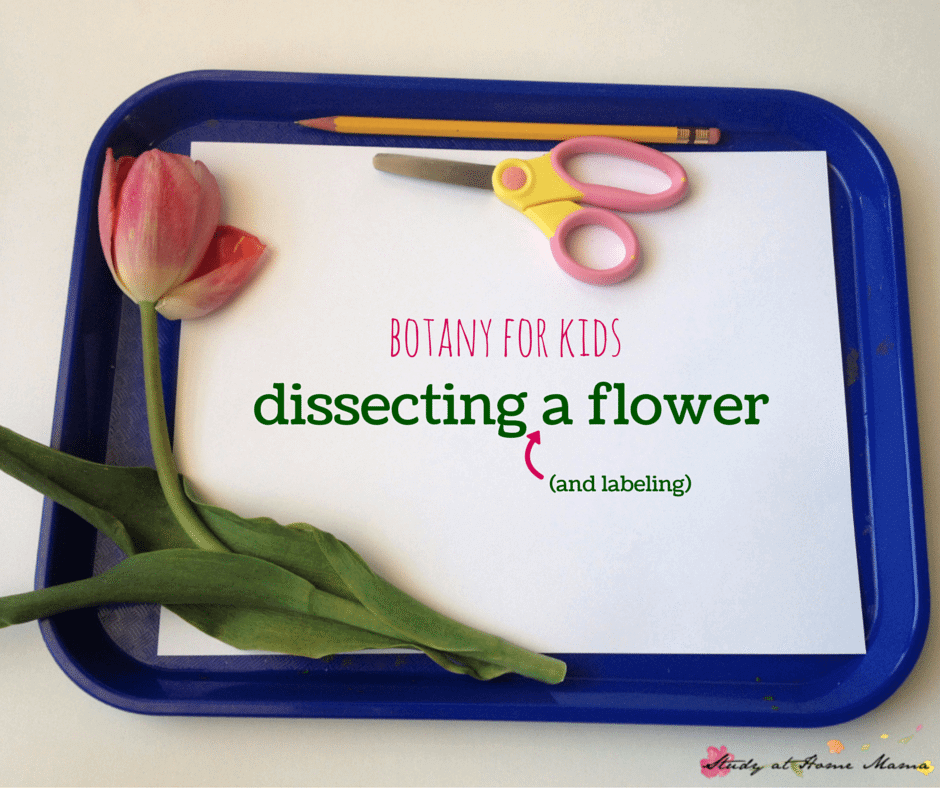 botany for kids: dissecting and labelling a flower