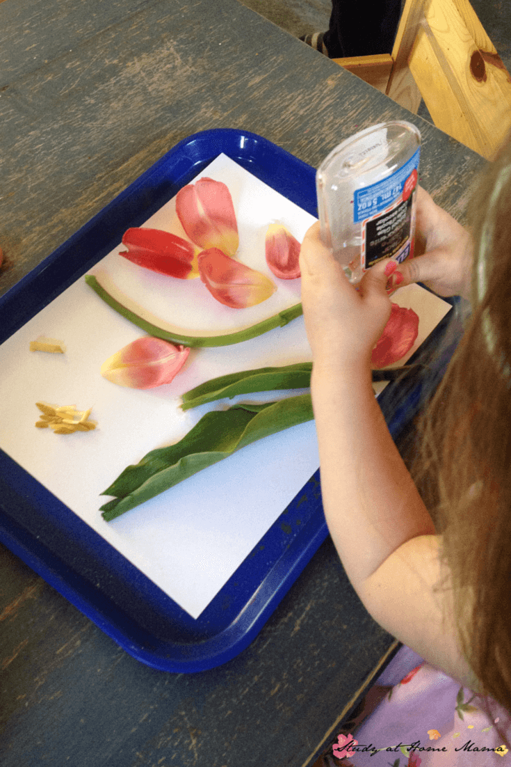 Gluing the parts of a flower onto a flower collage as part of a flower dissection science activity for kids