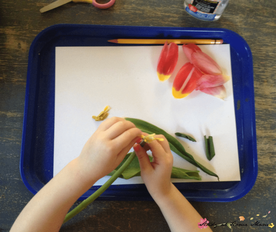 Dissecting a flower as part of an easy science activity for kids