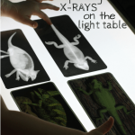 Zoology: Exploring X-Rays on the Light Table