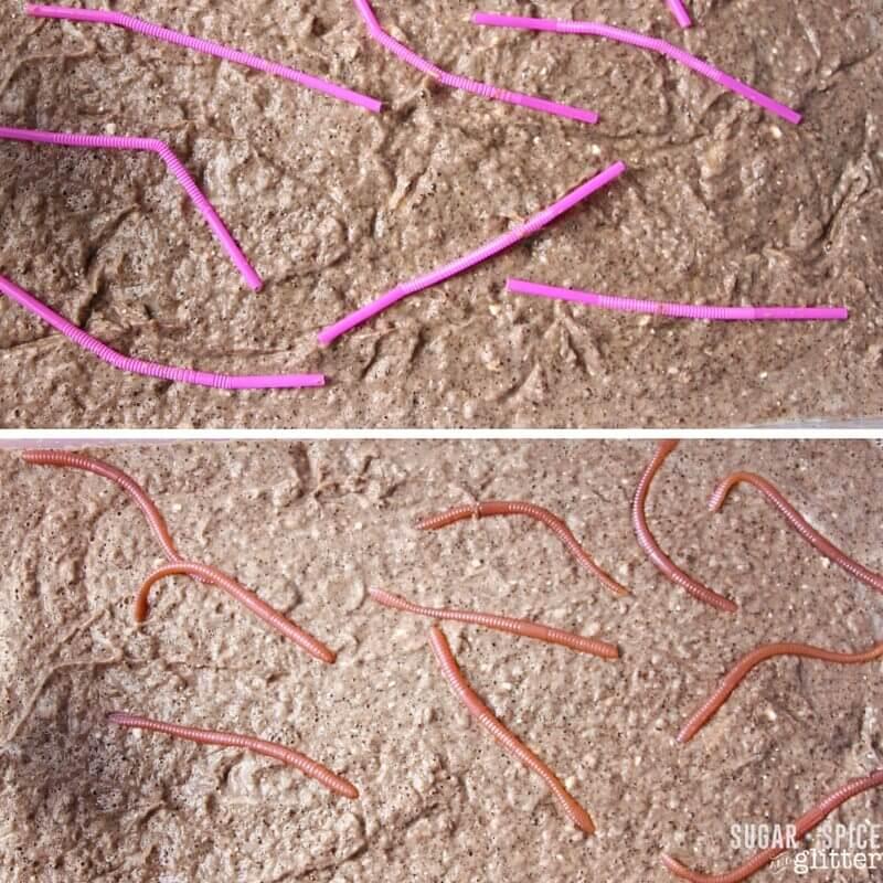 clean mud worm sensory bin (1)