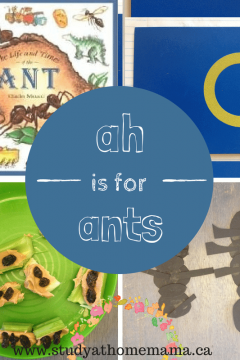 """""""ah"""" is for ants"""