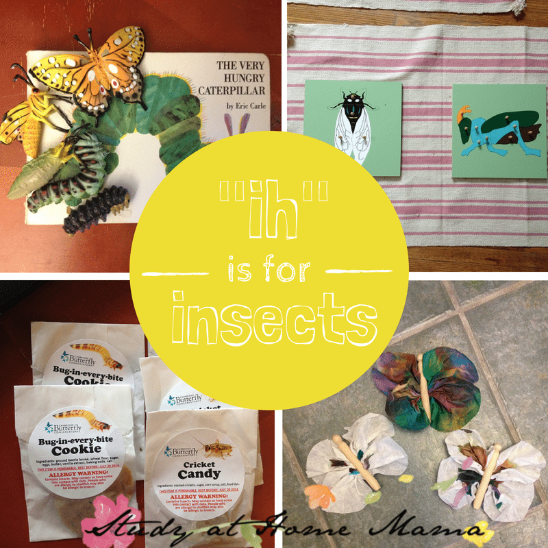 """ih"" is for insects unit study"