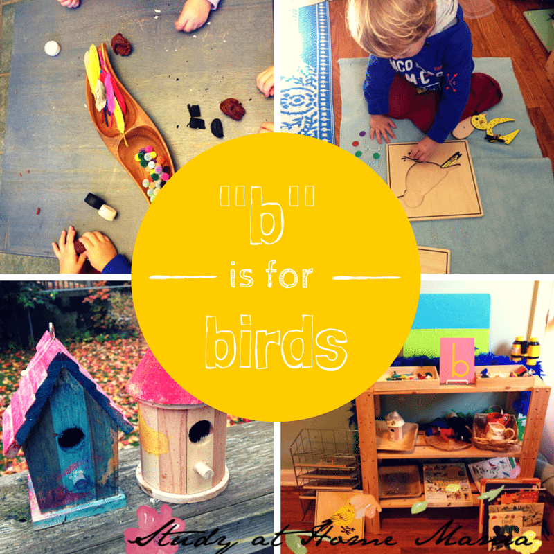 _b_ is for birds montessori unit study