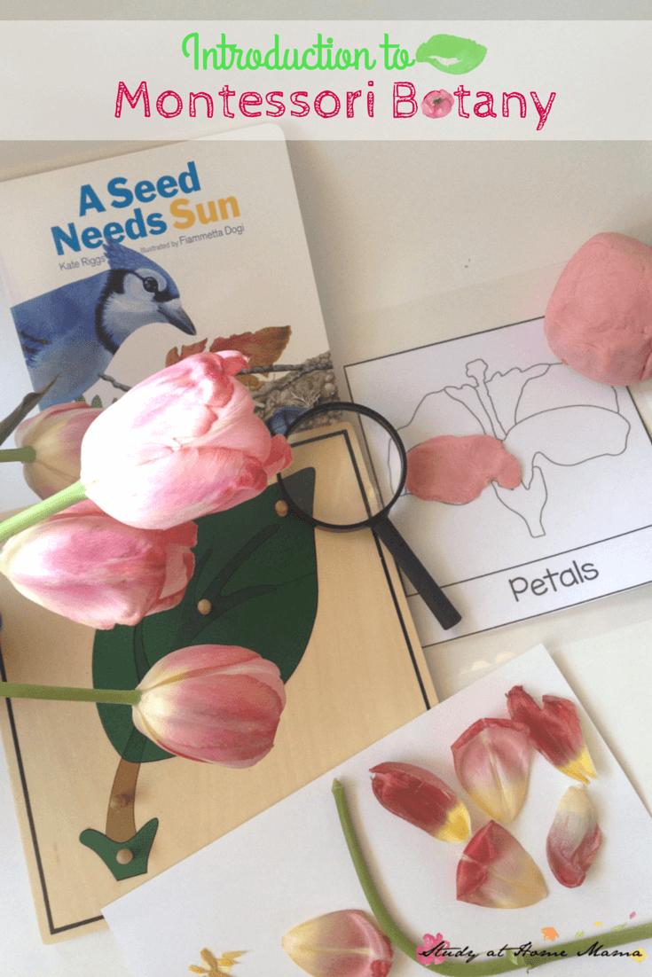 Introduction to Montessori Botany