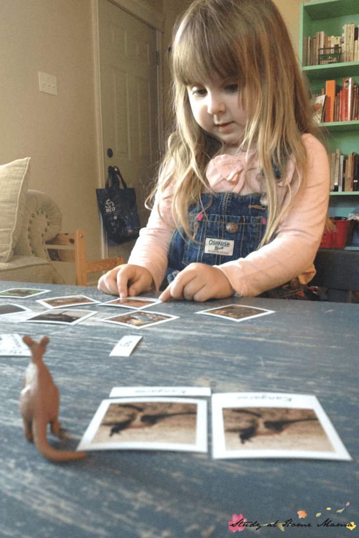 Montessori 3-part Cards for Australian Animals, part of a Australian Continent Box - a great way to do an Australia Unit Study or study geography for kids. Montessori Continent Boxes are such an amazing learning tool!