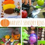 Top 10 Harvest Sensory Bins