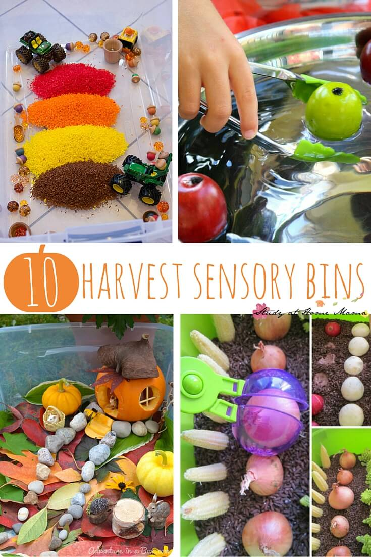 10 Harvest Sensory Bins, perfect fall sensory activities for kids to learn about harvest, or a collection of great farm sensory play ideas.