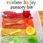 Rainbow Barley Sensory Bin