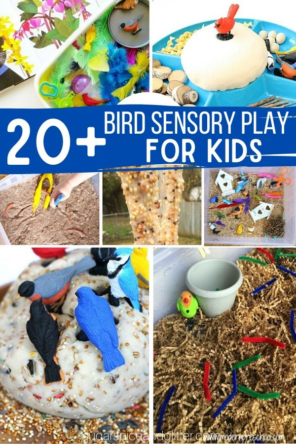Over 20 Bird-inspired Sensory Play Ideas, plus fun ideas to bring the bird theme into math, science and art