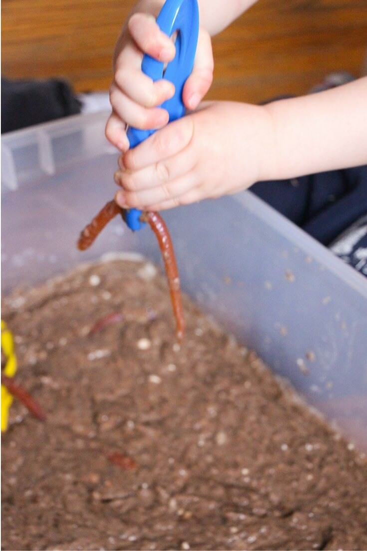 clean mud worm bin (1)