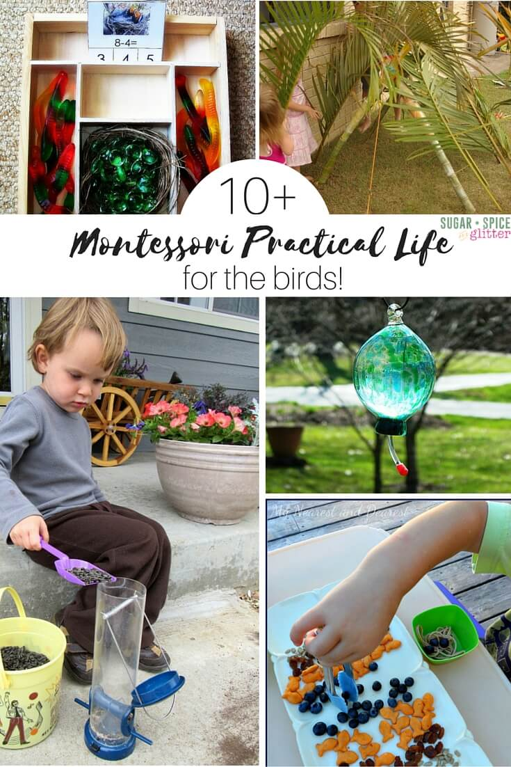 montessori practical life activities for learning about birds