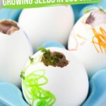 Botany for Kids: Egg Planting Experiment