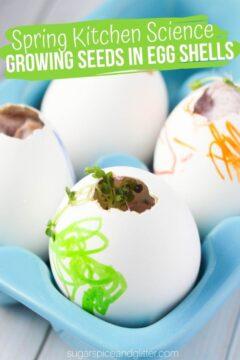Botany for Kids: Egg Planting Experiment