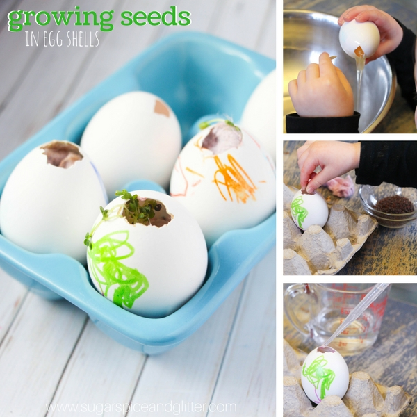 How to grow shamrock seeds in egg shells with dryer lint