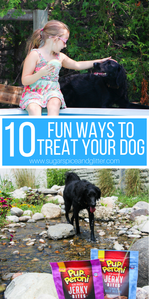 From special outings to special treats, here are 10 Fun Ways to Treat your Pup this Fall