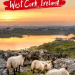West Cork Foodie Guide