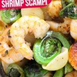 Fiddlehead Shrimp Scampi